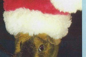 skinny-pig-santa