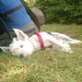 Thumbnail for Camping with Your Dog